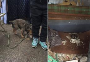 Pies był przywiązany do stołu, koty karmiono wodą z ryżem! Dramat zwierząt na sopockiej posesji-7295