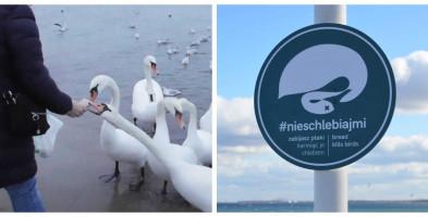 """Kampania #nieschlebiajmi w Sopocie. """"Będzie skuteczniejsza, gdy tablice trafią na plażę""""-7639"""