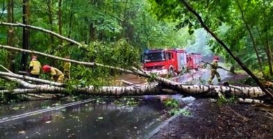 Sopot: Padają jak zapałki! W ciągu kilku dni 7 drzew runęło lub złamało się-9686