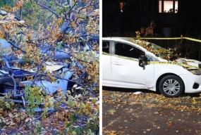Zniszczone samochody i powalone drzewa: skutki nawałnicy w Sopocie [FOTO]-10728