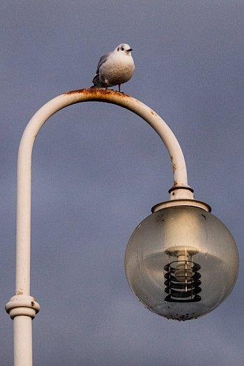 Klimatyczny Sopot w ostatnie dni listopada [FOTO]-447